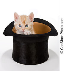 Magic cat - Six weeks old red kitten in a macigal hat