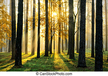 Beautiful morning scene in the forest with sun rays and long shadows