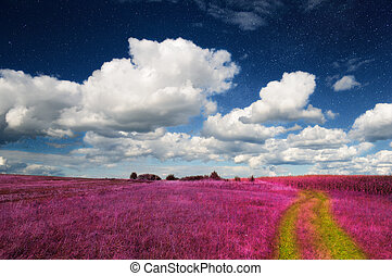 Magic Landscape ? Pink Field and Sky with Real Stars