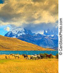 Rocks Torres del Paine