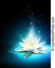 Magic lily flower on the water surface