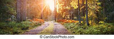Magic morning in the autumnal beautiful forest