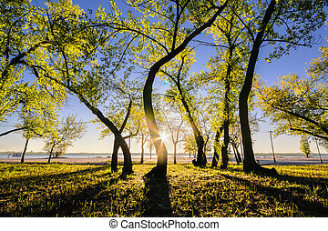 Magic morning with the rising sun creating a play of light in the city park. I