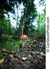 Magic Mushroom - A magic mushroom in the forest - fly...