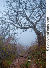 magic snag with fallen leaves on a misty autumn day, landscape in the mountains