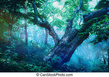 Magic summer forest