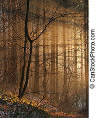 Magic sunbeams in the forest