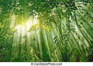 magic sunlights in forest - magic sunlight in fresh misty...