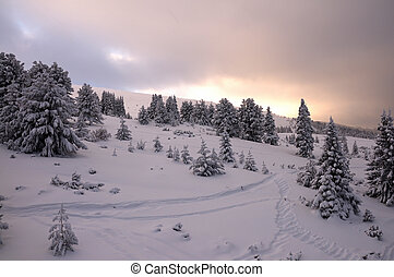 Magic view of Winter Park in