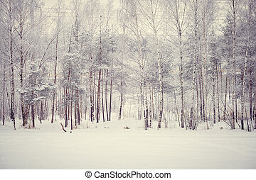 Magic winter snowy forest in day light