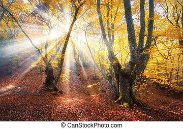 Magical autumn forest with sun rays