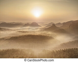 Magical autumn forest with sun rays in morning
