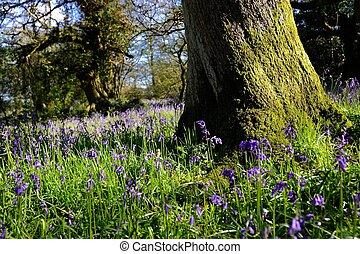 Magical bluebell woods in Dorset.