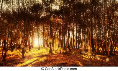 Photo-montage of trees in a forest with lights and special effects superimposed