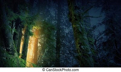 Magical Forest With Golden Light Glowing Through Trees -...