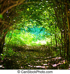 Magical forest with path to the light through dark tunnel of...
