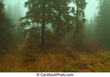 Magical misty forest