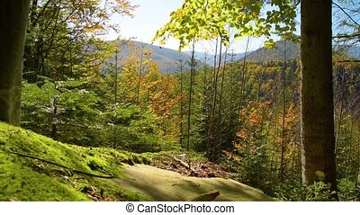 Magical mountain forest - Mystic Mountain Forest. Green...