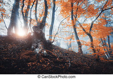 Magical old tree with sun rays in the morning. Forest in fog