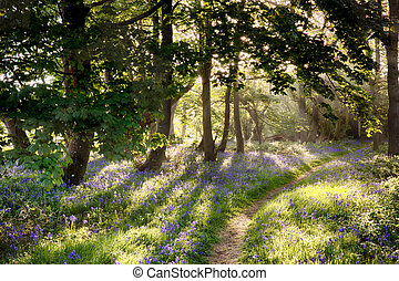 Magical path through bluebell forest with early morning...