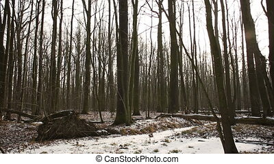 Magical scenic floodplain forest covered with snow in...