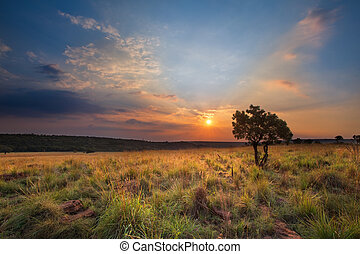 Magical sunset in Africa with a lone tree on a hill and...