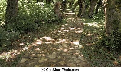 Magical trail in tropical forest - Georgia.