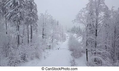 Magical view of snowy woodland - Tranquil evergreen trees...