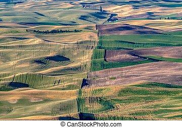 magical wheat farm fields in palouse washington