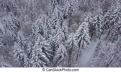Magical woods with snowy trees - Wonderful aerial view of...