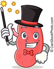 Magician kidney mascot cartoon style