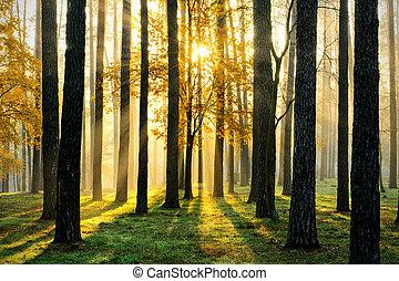 magie, forêt