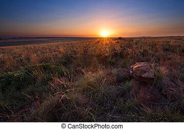 magique, coucher soleil, dans, afrique, à, a, seul arbre, sur, colline, et, non, nuages