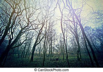 magisch, dunkel, und, mysteriös, forest.