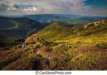 magisches, rosa, rhododendron, blumen, bergen