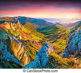 magisches, rosa, rhododendron, blumen, in, der, berge.