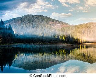 magnífico, brumoso, salida del sol, en, el, lago, en, bosque