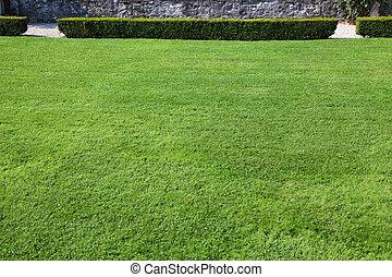 magnífico, gramado