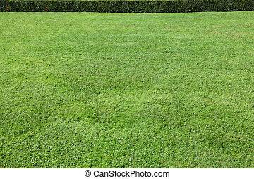 magnífico, gramado verde