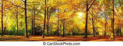magnífico, otoño, panorama, de, un, soleado, bosque