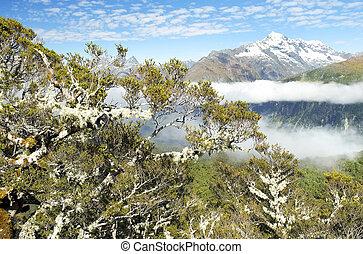 magnífico, paisajes, de, nueva zelandia