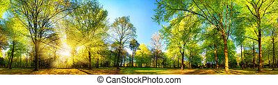 magnífico, panorámico, primavera, paisaje, con, iluminado por el sol, árboles