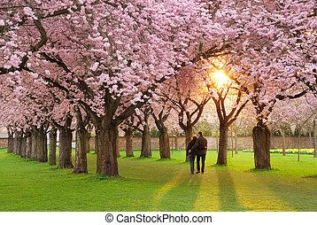 magnífico, primavera, paisaje