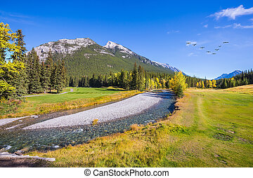 magnífico, vale, em, parque nacional banff