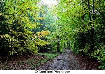 magnífico, verde, caminho, em, a, floresta, polônia