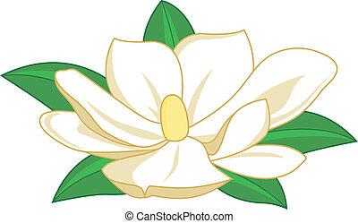 magnólia, vetorial, flower., ilustração