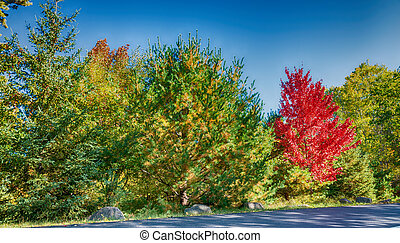 Magnificence of New England foliage scenario in autumn