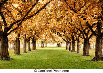 Magnificent park with rows of beautiful trees in warm autumn colors on a lawn