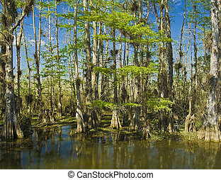 Magnificent Everglades - panoramic shot