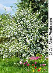 Magnificent garden in spring